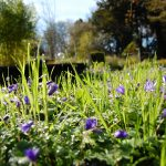 Gardens at Murray Edwards Events