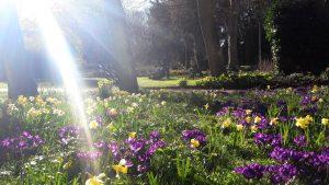 Murray Edwards College Gardens Cambridge